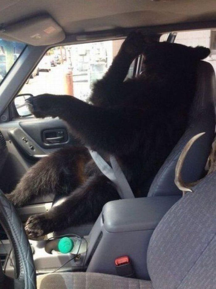 Понять и простить: Забавные фотографии из жизни автомобилистов и автомобилей