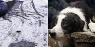 Дворняжка спасла щенка